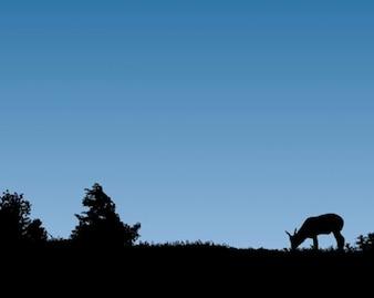 libre pastoreo de las cabras