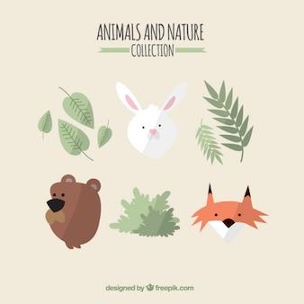 Los animales encantadores y colección de la naturaleza