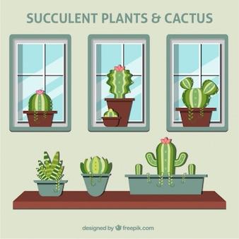 Macetas de cactus con ventanas
