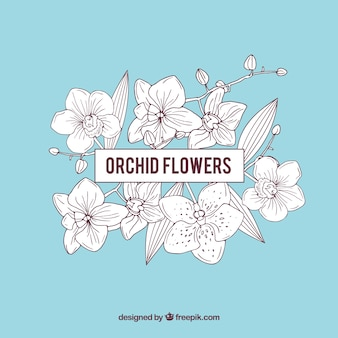 Marco con orquídeas y fondo azul