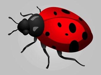 Mariquita insecto vector gráficos de puntos