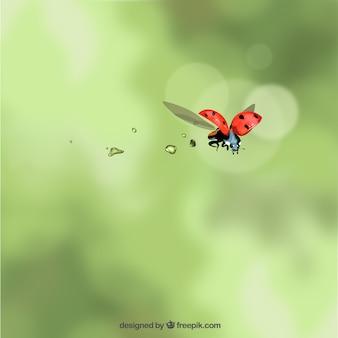 Mariquita volando