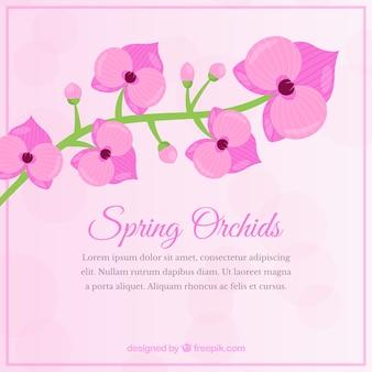 Orquídea rosa en primavera