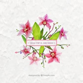 Orquídeas bonitas de acuarela