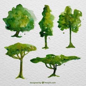 Pack de árboles verdes de acuarela