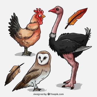 Pack de aves dibujadas a mano
