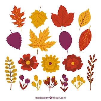 Pack de bonitas hojas otoñales y flores