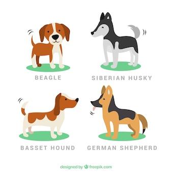 Pack de cachorros simpáticos