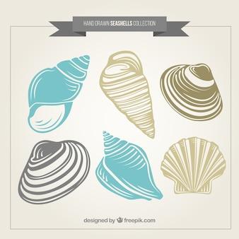 Pack de conchas de mar dibujadas a mano