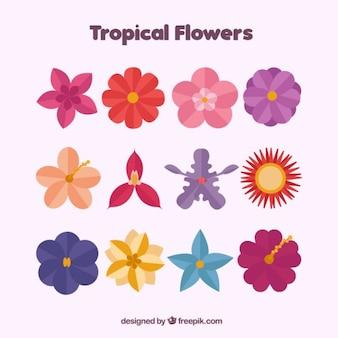 Pack de flores bonitas
