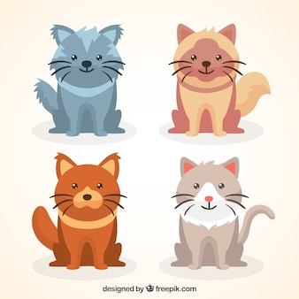 Pack de gatitos adorables