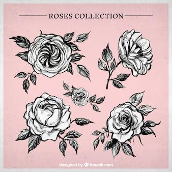 Pack de rosas dibujadas a mano