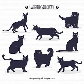 Pack de suluetas de razas de gato