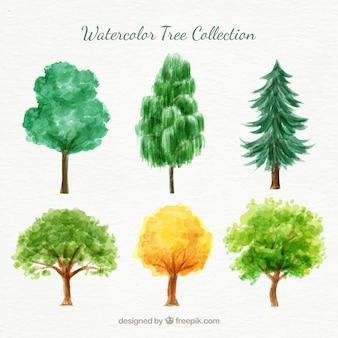 Pack de variedad de árboles de acuarela