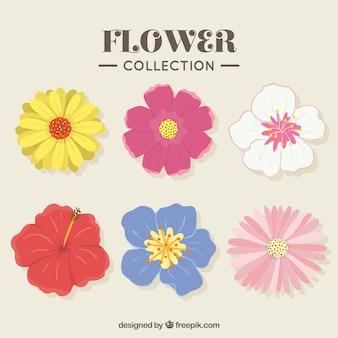 Pack dibujado a mano de diferentes tipos de flores