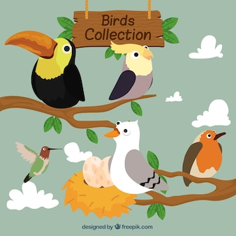 Pájaros en ramas dibujados a mano