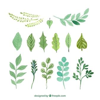 Pintados a mano las hojas verdes