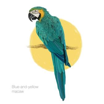 Pintura dibujada a mano de macaw azul y amarillo