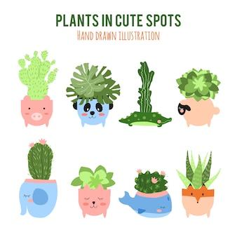 Plantas en maceteros bonitos