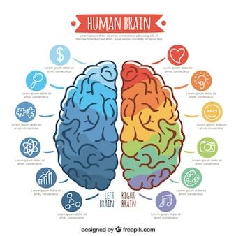 Plantilla infográfica de cerebro colorido