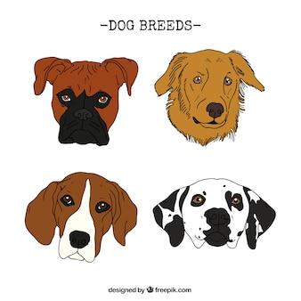 Razas de perro dibujadas a mano