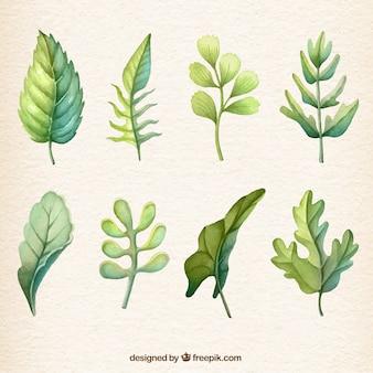 Recolección de hojas de acuarela