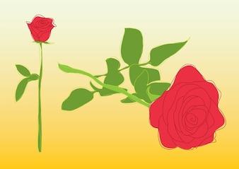 rosas vector