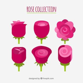 Selección de flores en tonos rosas