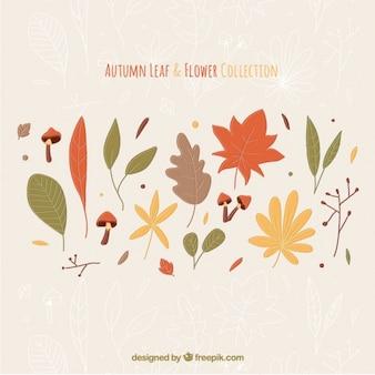 Selección de flores y hojas con diferentes colores