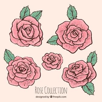 Selección de rosas dibujadas a mano