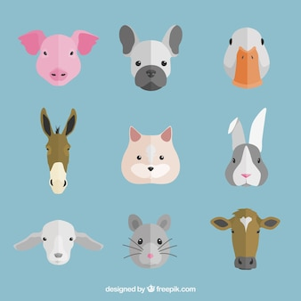 Selección plana de caras de animales decorativas