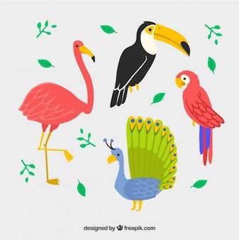 Set de aves exóticas dibujadas a mano