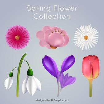Set de bonitas flores en estilo realista