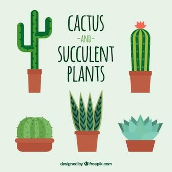 Set de bonitos cactus en diseño plano