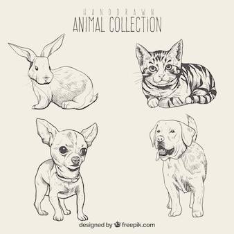 Set de bosquejos de bonitos animales