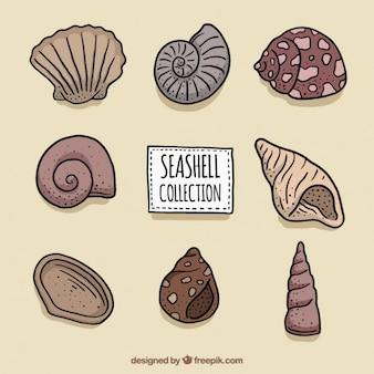 Set de conchas del mar dibujadas a mano
