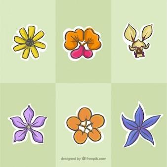 Set de flores tropicales dibujadas a mano