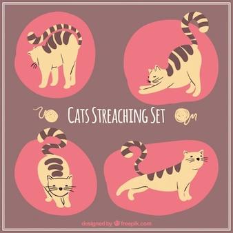 Set de gatos estirándose
