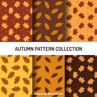Set de patrones con diferentes tipos de hojas