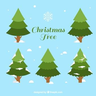 Set de pinos nevados de navidad