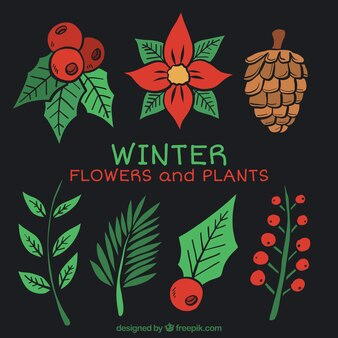 Set de plantas navideñas dibujadas a mano