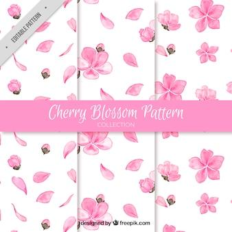 Set de tres patrones de flores del cerezo en acuarela
