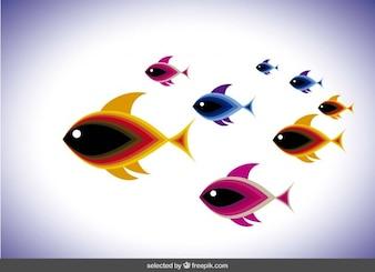 Shoal con peces de colores