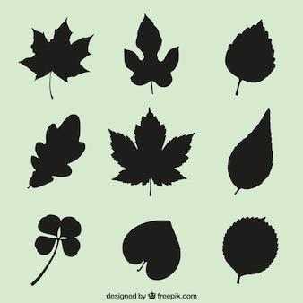 Siluetas de hojas