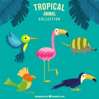 Simpáticos animales tropicales dibujados a mano