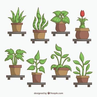 Surtido de diferentes plantas con macetas