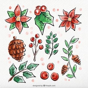 Surtido de flores de invierno de acuarela dibujadas a mano