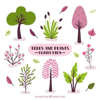 Surtido de plantas y árboles decorativos