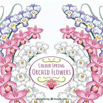 Tarjeta de orquídeas de colores