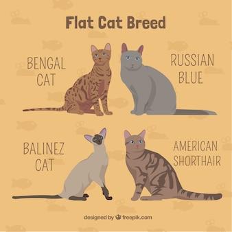 Tipos de gato dibujados a mano